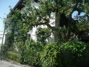 salzburg tischlerei kurz (1)